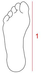 Kokotaulukko naisten kengät